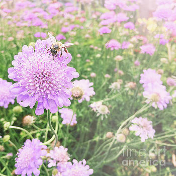 Little lady on scabiosa by Cindy Garber Iverson
