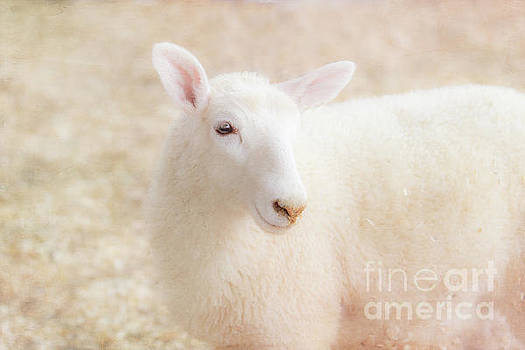 Little Lamb by Eleanor Abramson