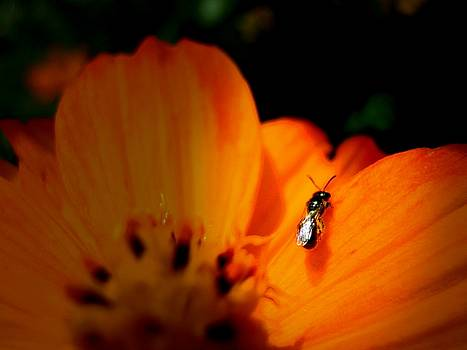 Little Lonely Fly by Amanda Romer