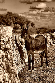Pedro Cardona Llambias - Little Mediterranean Donkey Dreams With White Eyes And Belly in sephia By Pedro Cardona