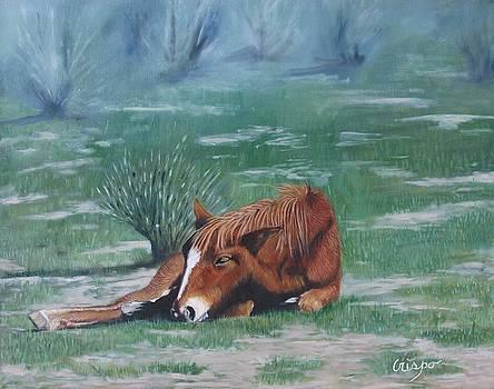 Little nap by Jean Yves Crispo