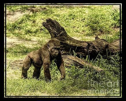 Little One - Gorilla by Jan Mulherin