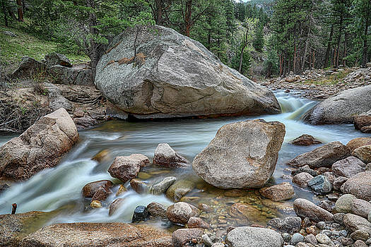 Little Pine Tree Stream View by James BO Insogna