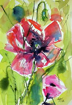 Little poppy by Kovacs Anna Brigitta