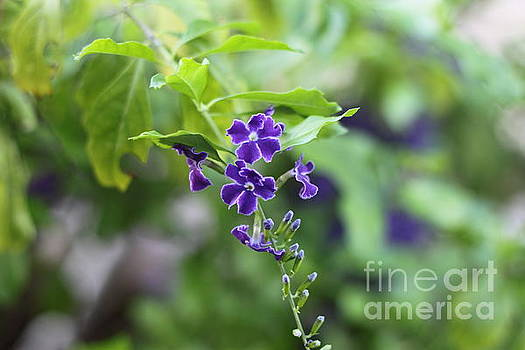 Little Purple Flowers by Sara Ricer