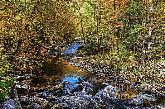 Paul Mashburn - Little River Reflection