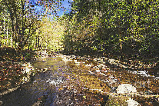 Little River, Smoky Mountains by Joan McCool