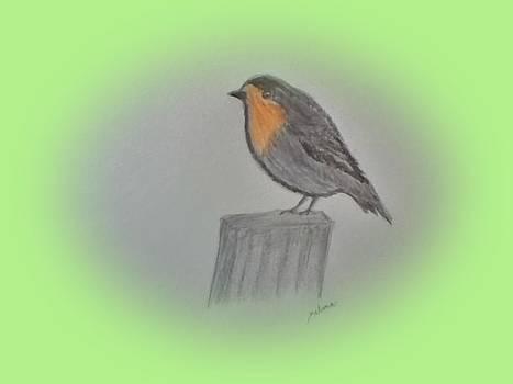 Little Robin by Nelma Grace Higgins