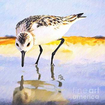 Little Sandpiper by Tammy Lee Bradley