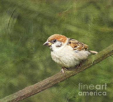 Little Sparrow #2 by Lisa Cockrell