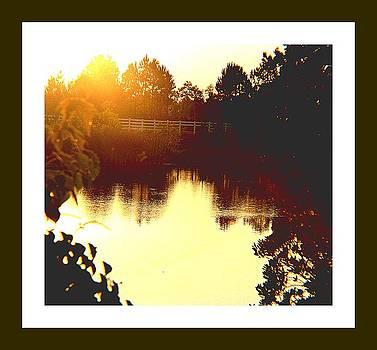 Little sunlight by Vanessa Reed