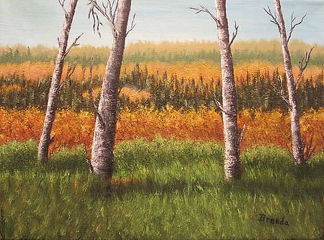 Little Swan Valley 2 by Brenda Maas