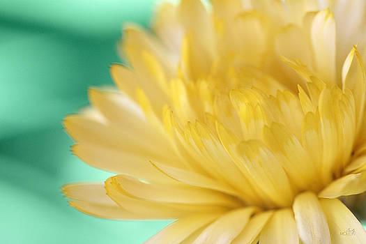 Little Teal, Lotta Yellow I by Cindy Moleski