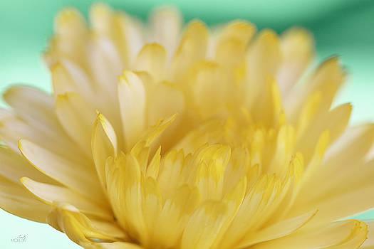 Little Teal, Lotta Yellow II by Cindy Moleski