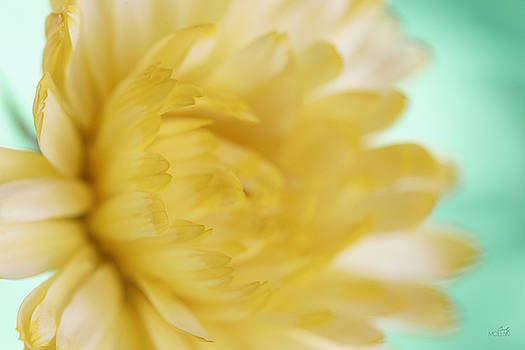 Little Teal, Lotta Yellow III by Cindy Moleski