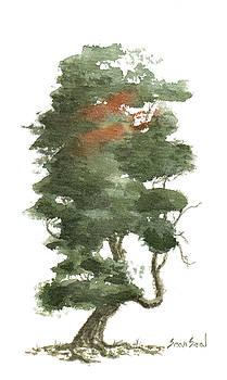 Little Tree 16 by Sean Seal