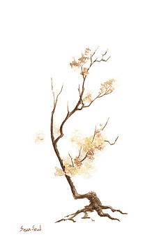 Little Tree 61 by Sean Seal