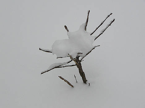 Little Tree in Winter by Richard Mitchell