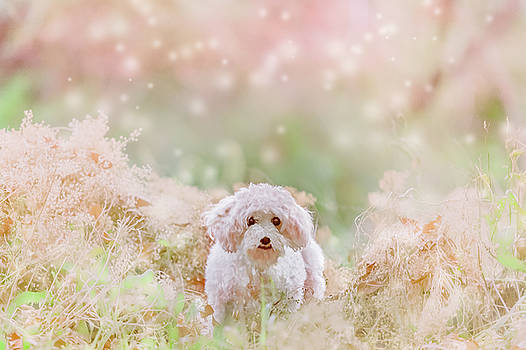 Little White Dog by Debi Bishop
