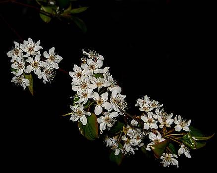 Little White Flowers by Karen Harrison
