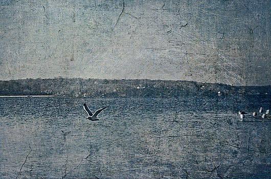 Little Wing by Tori Yule