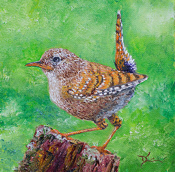 Dee Carpenter - Little Wren