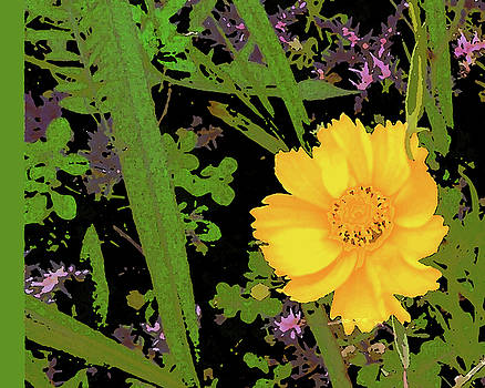 Little Yellow One by Peggy Cooper