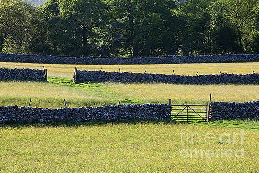 Littondale meadows in summer by Gavin Dronfield