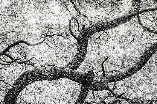 Sandra Selle Rodriguez - Live Oak abstract 1