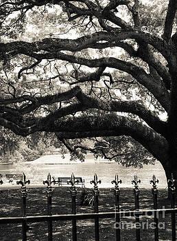 Live Oak and Ironwork by Julia Rigler