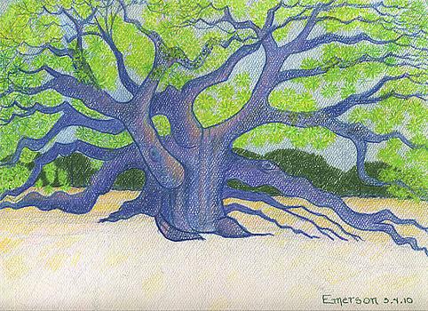 Live Oak by Harriet Emerson