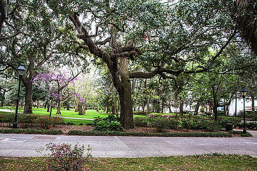 Live Oak In The Square Savannah Georgia by Carol Mellema