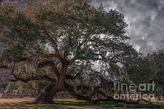 Dale Powell - Live Oak Stretching its Limbs