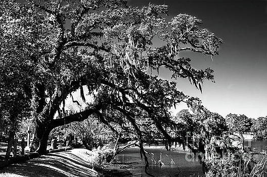 Live Oak Tree Dripping with Spanish Moss Stretching to the Water by Dale Powell
