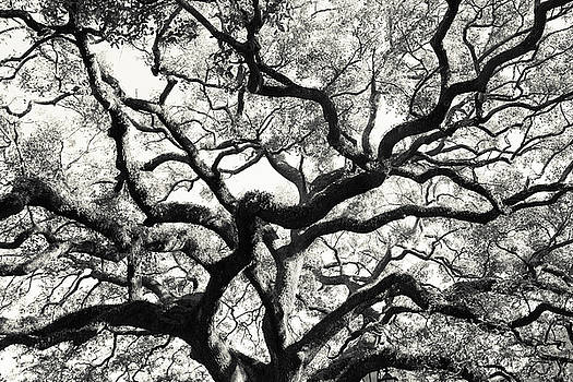 Live Oak With Spanish Moss Savannah Georgia by Carol Mellema