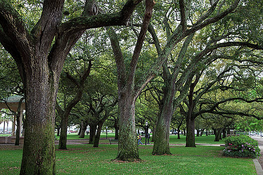 Jill Lang - Live Oaks in Charleston
