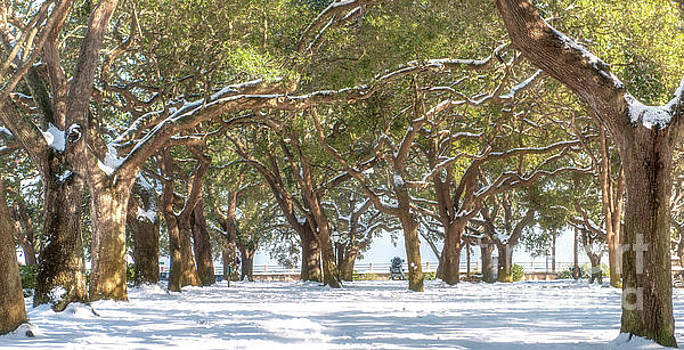 Live Oaks in Snow by Dale Powell