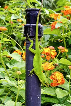 Livin Green by Stacey Rosebrock