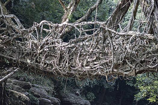 Ramabhadran Thirupattur - Living Root Bridge