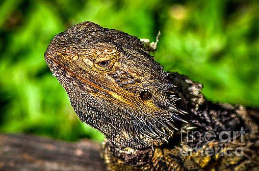 Lizard 1 by Barbara Dudzinska