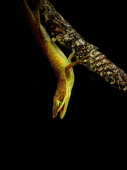 Lizard 3 by David Weeks