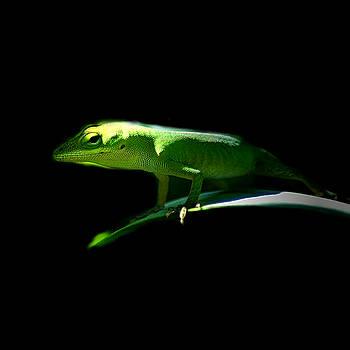 Lizard 4 by David Weeks