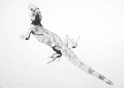 Lizard by Angela Qian