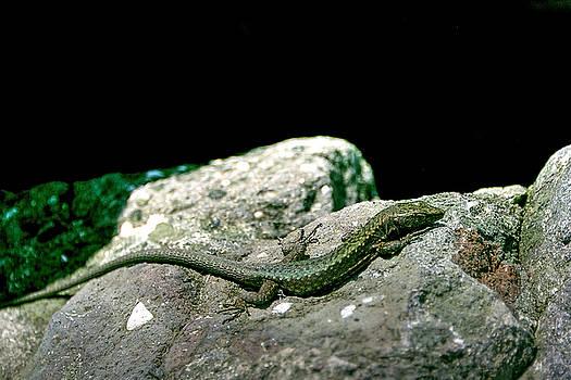 Lizard by Gouzel -