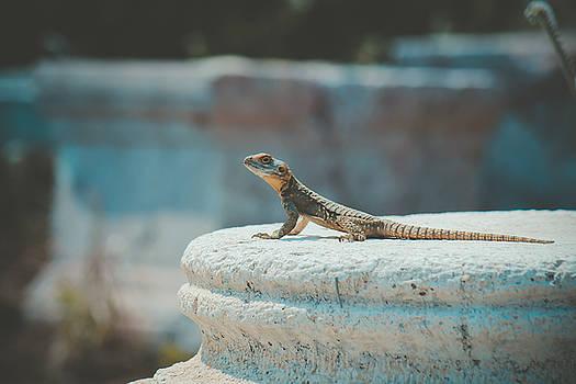 Lizard in Side by Yekaterina Grigoryeva