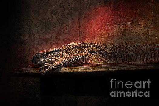 Lizard by Doc Braham