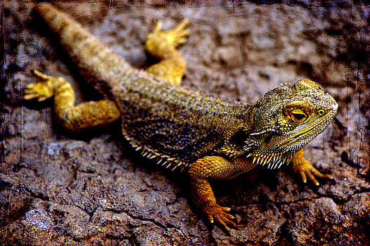 Lizard by Off The Beaten Path Photography - Andrew Alexander