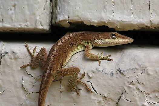 Paulette Thomas - Lizard