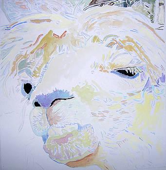 Llama by Lea Cox