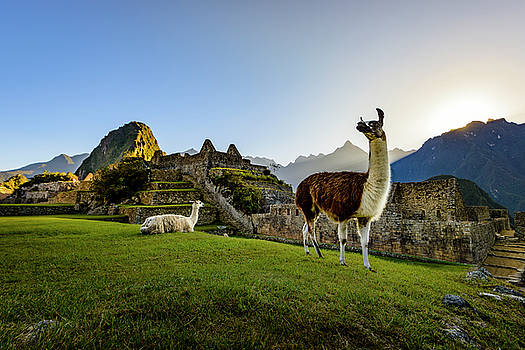 Oscar Gutierrez - Llamas at the Ruins
